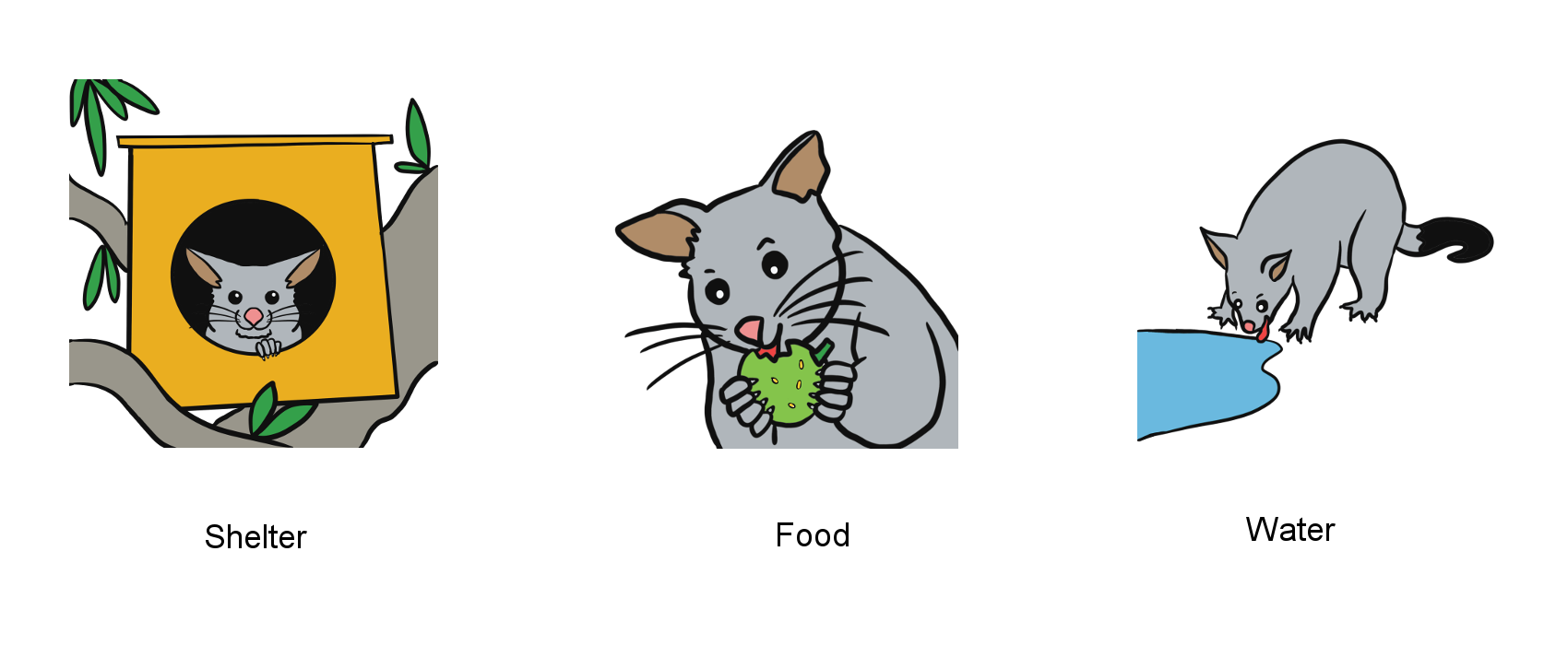 Illustrations of a possum in a next box, eating a fruit and drinking water