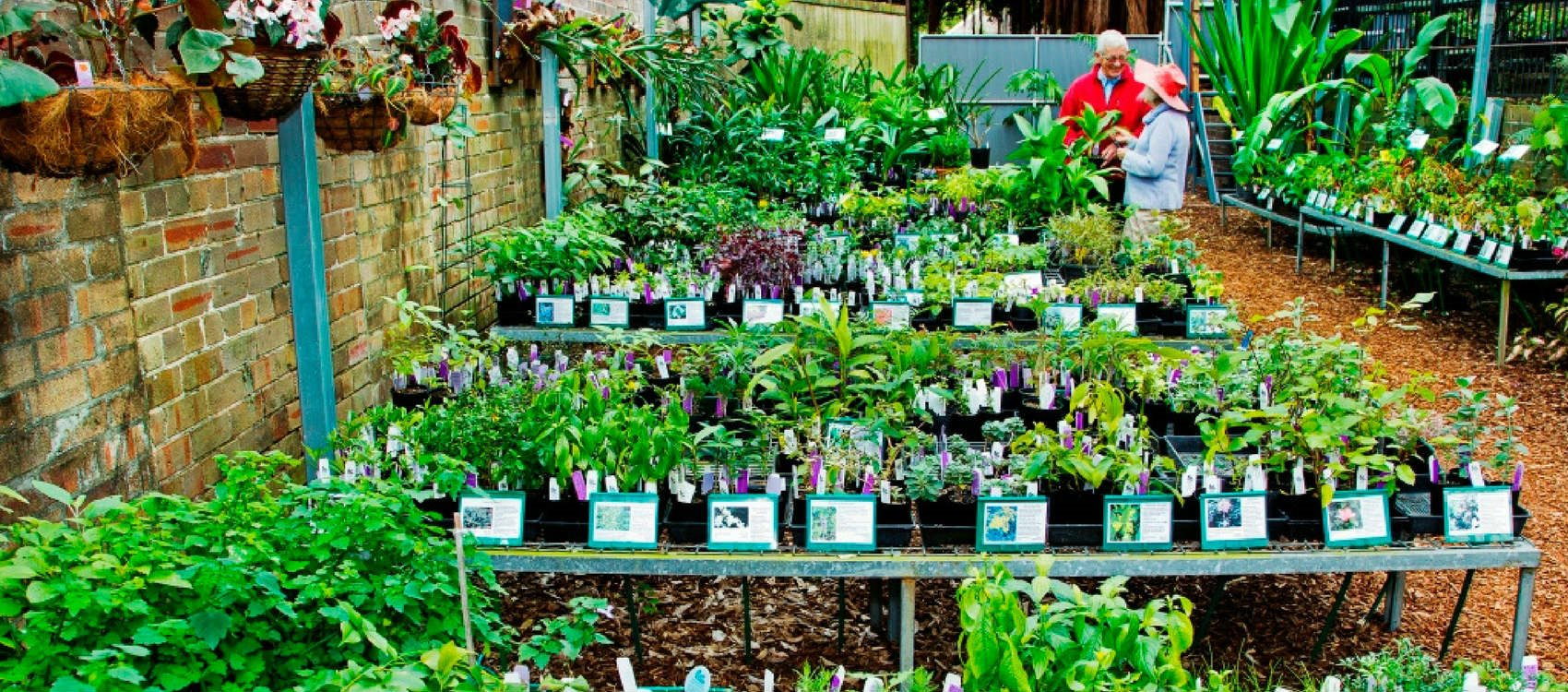Sat 12 Jan 2019 Home What S On Plants For At The Growing Friends Nursery