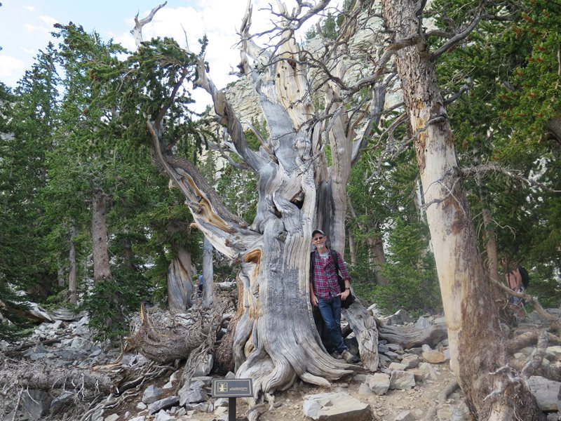 Great Basin National Park_Brett with a 3500 year old Bristle Cone Pine.JPG