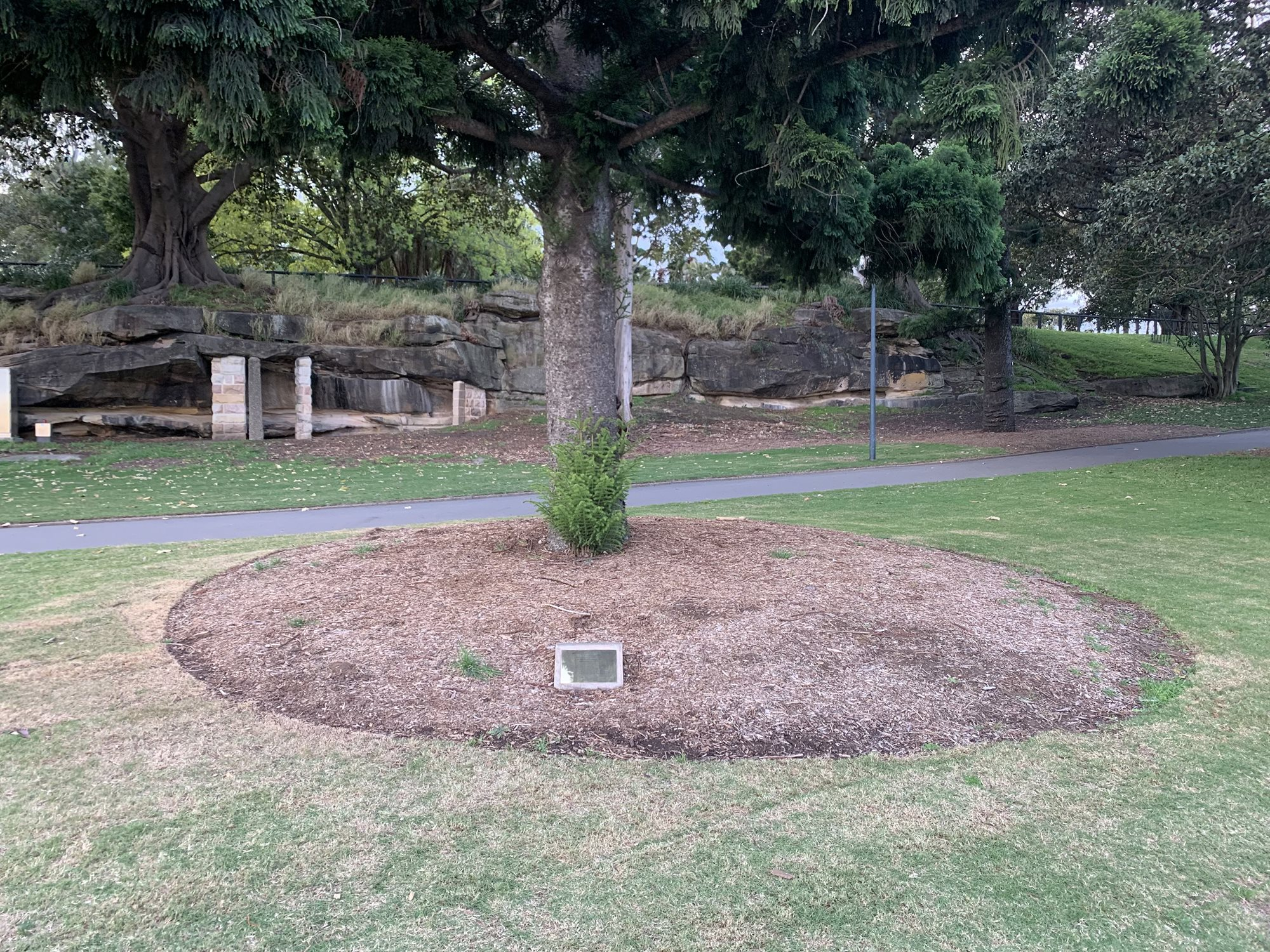 The 9/11 memorial tree in the Domain