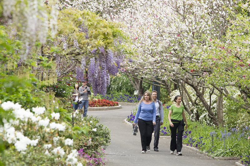 Spring Walk, the Royal Botanic Garden Sydney