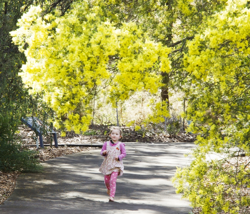 Child walking through the Wattle Garden