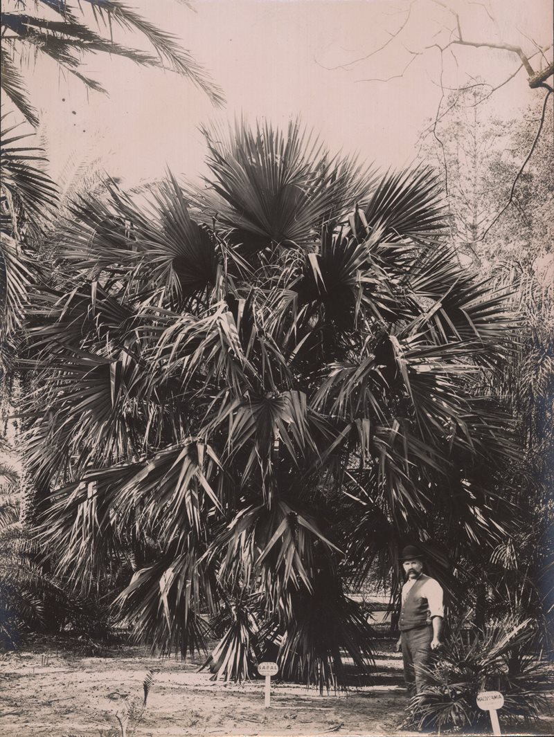 Palm Grove historical photo