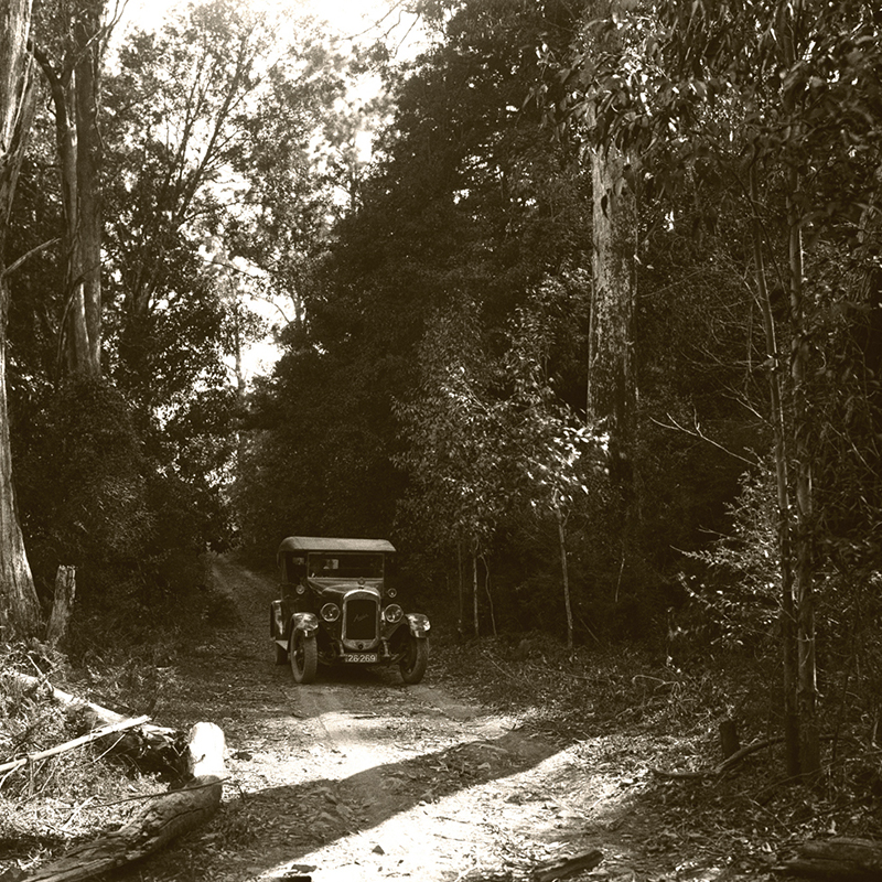 blue mountains botanic garden mount tomah 1920s the jungle