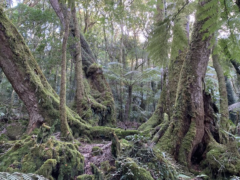 Lamington National Park .JPG