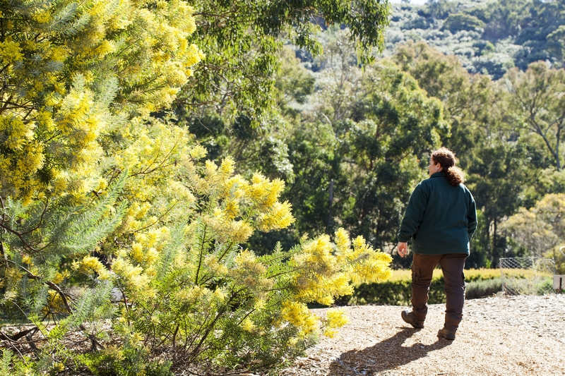 Lady walking through the Wattle Garden