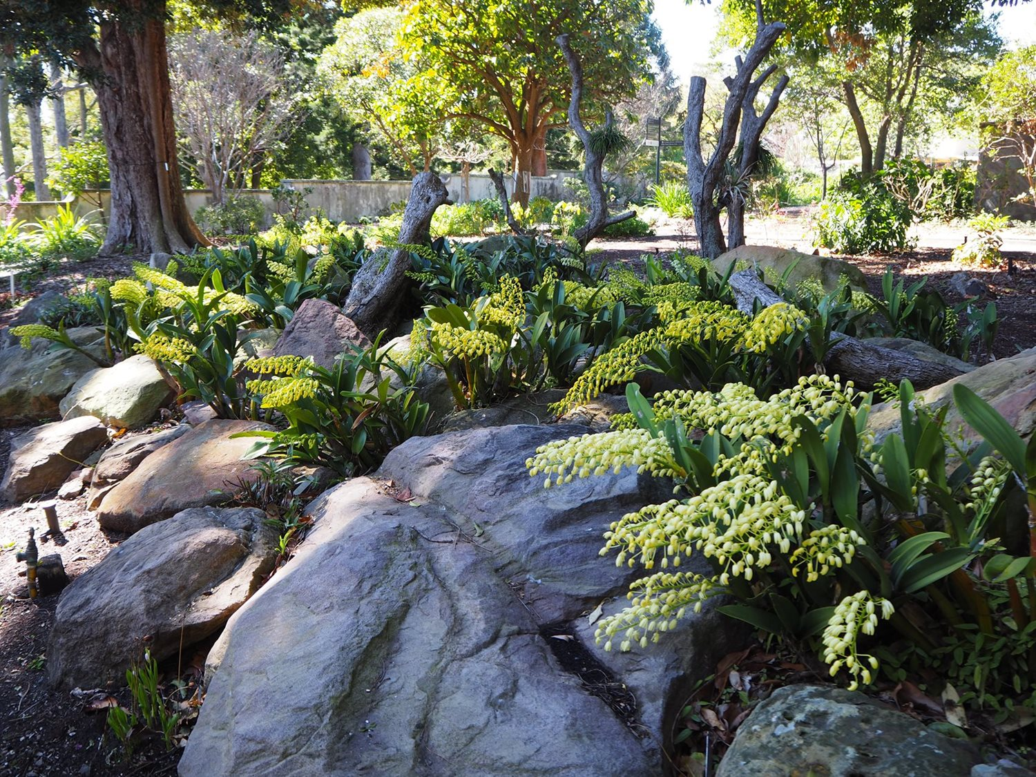 September Is All About Orchids The Royal Botanic Garden