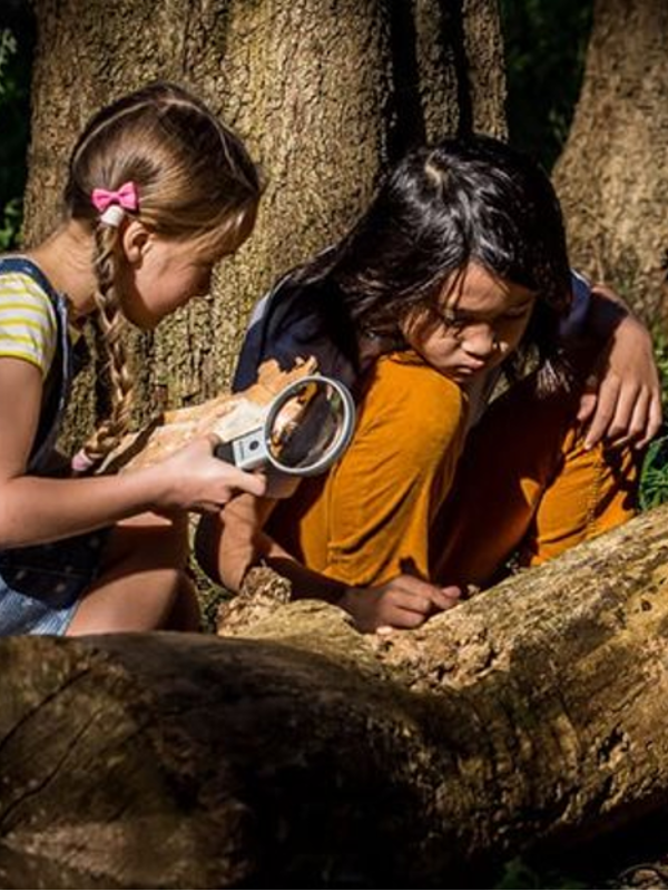 Children examining a tree with magnifying glass