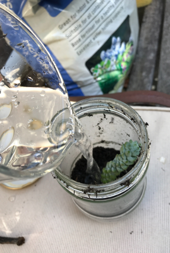 pouring water into the jar with plant and soil