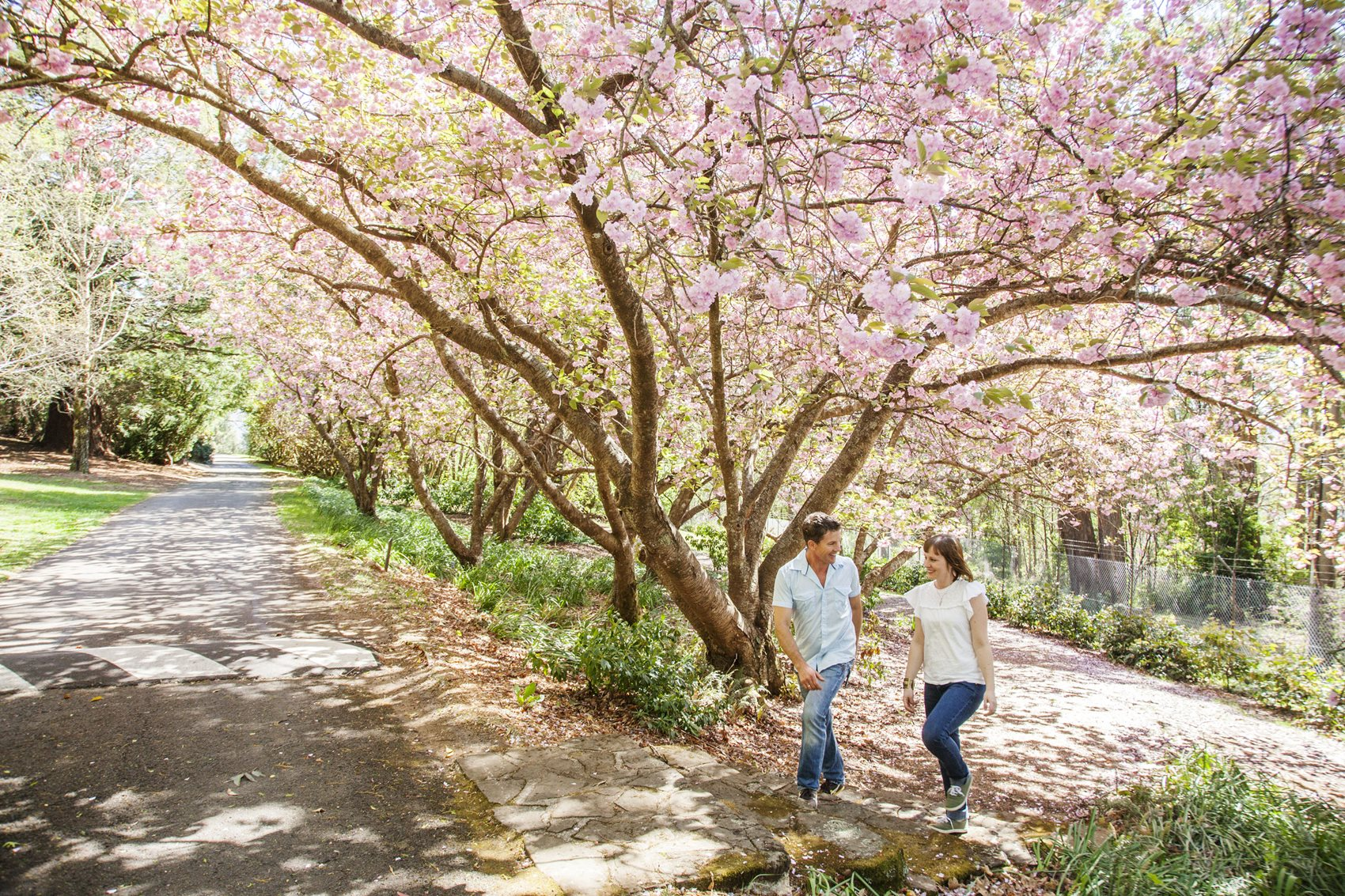 Leap Into Spring With Blue Mountains Botanic Garden Bloom Festivals