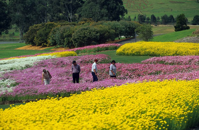 Visitors experiencing the Garden's paper daisy display in 1998