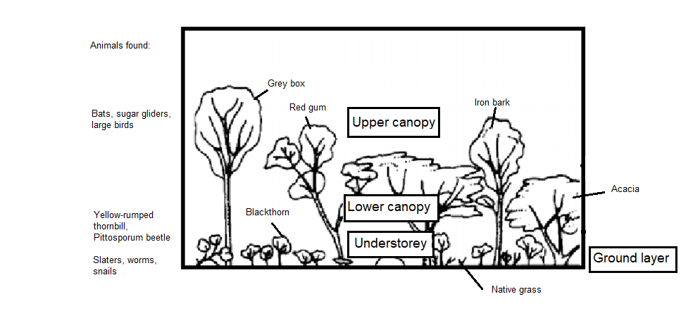 Drawing of vegetation in Woodlands with annotations