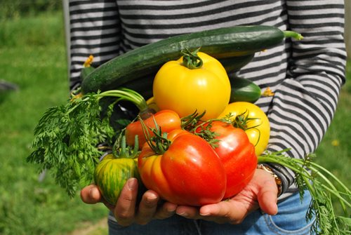 Best vegetables to grow for beginners
